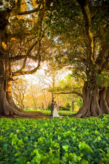 Magical spring wedding with golden yellow and greens in Sydney